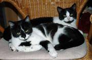 2 Katzenmädels suchen ein Zuhause