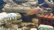 Fische mit Aquarium