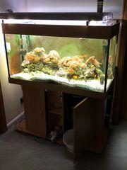 Meerwasser Aquarium 120x60x50 LxHxT nur komplett