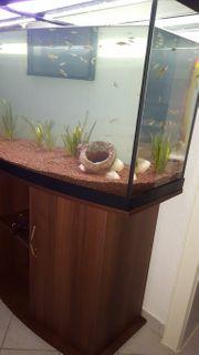 Aquarium 140x60x60 In Furth Fische Aquaristik Kaufen Und