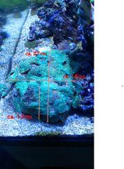 Korallen Fische Lebendgestein Meerwasserauflösung NUR