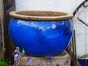 Großer Blauer Blumentopf