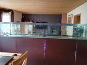 Meerwasseraquarium 1 000l ohne Fische