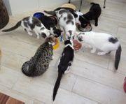 Babykatzen suchen Familienanschluss