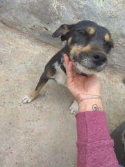 Terrier-Mischling Lina