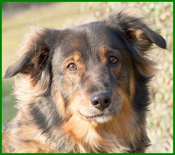 Eyva, 5 Jahre - » Hunde