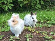 Kaninchensitter gesucht!