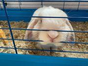 Kaninchen sucht Zuhause