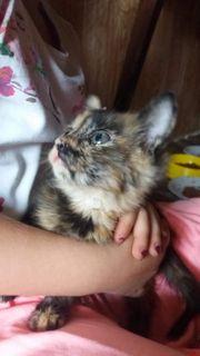 Kitten 3 Monate - Tierschutz suchen