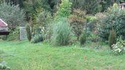 Gartengrundstück 1300 qm