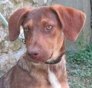 Roxy - süßes Hundemäderl