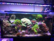 Hobbyaufgabe 200 Liter Meerwasser-Aquarium komplett