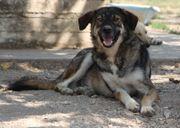 Valerios, bildschöner Hund
